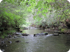 Garcia River Tributary